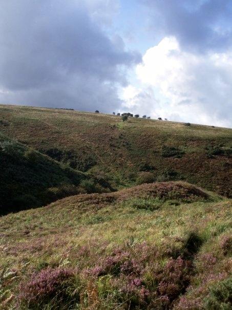 exmoor moor colours - Version 2.jpg