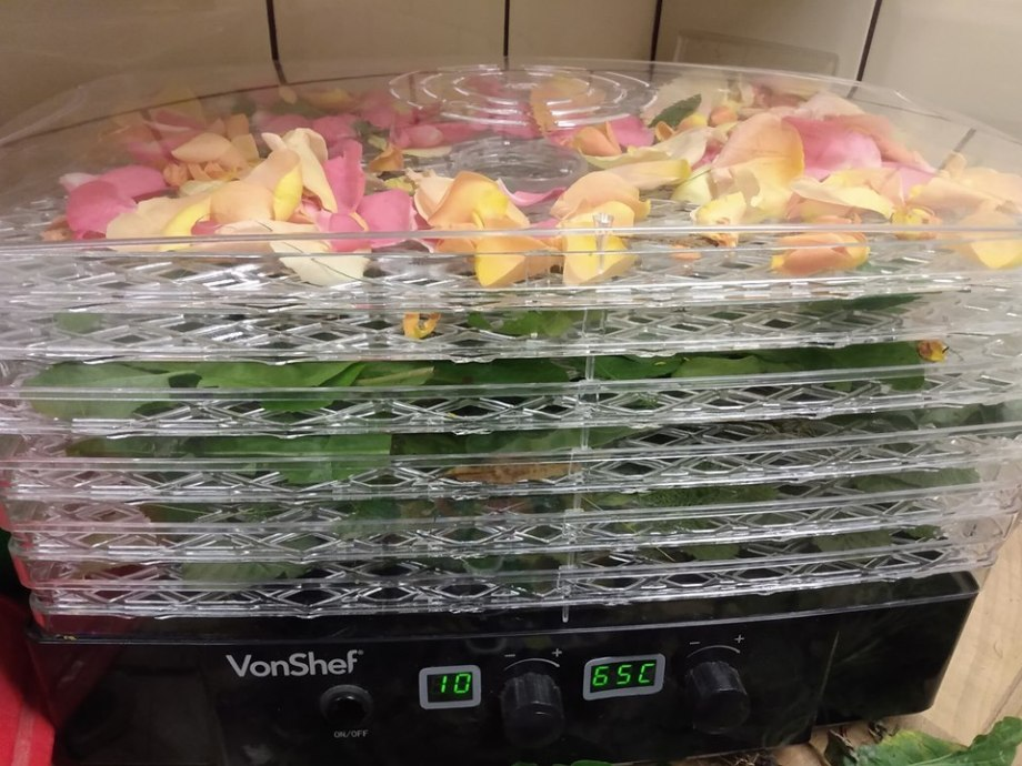 dehydrator filled with fresh leaf and petal forage