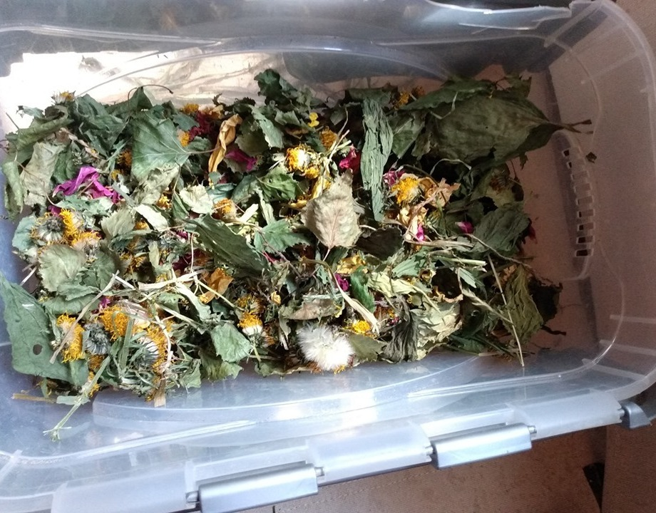 dehydrated mixed box of edible weeds, flowers, and tree leaves
